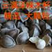 云南辣木籽产地,昆明辣木籽价格是多少钱一斤