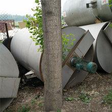 2017閑置二手工業品不銹鋼儲存罐出售-儲罐直銷廠圖片