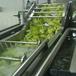 秋葵清洗机芥菜去泥沙清洗机中药材清洗流水线