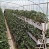 大量供應優質種植槽