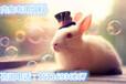 预防肉兔咬毛的预混料