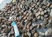 乌克兰琥珀原石蜜蜡2-5克价格