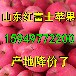 山东哪里的红富士苹果批发质量好价格便宜一点