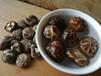 永安山货农民自种香菇大米芋头金针菜