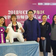 山東青島愛爾寵物美容學校,16年專注寵物美容培訓,權威有保障!圖片