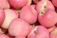苹果批发价格嘎啦苹果行情苹果产地分析