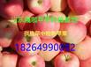 山东苹果批发价格最新苹果产地价格