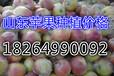 浙江义乌市美八苹果产地价格及批发价格详情