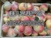 今日山東蘋果批發價格蘋果批發蘋果產地供應