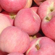 周口市蘋果批發價格嘎啦蘋果批發蘋果產地供應圖片
