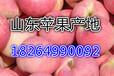 山东苹果价格嘎啦苹果最新价格行情