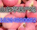 浙江龙泉嘎啦苹果产地价格及批发价格详情