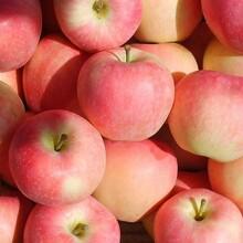 河南開封市蘋果批發價格嘎啦蘋果批發價格蘋果產地價格圖片