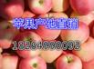 河南平顶苹果批发价格美八苹果批发苹果市场价格