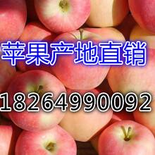 陜西蘋果批發價格嘎啦蘋果蘋果行情分析圖片