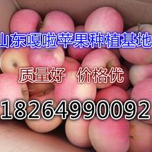 湖南張家界嘎啦蘋果產地批發價格圖片