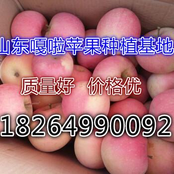 益阳嘎啦苹果最新市场价格
