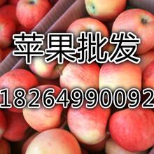 周口市蘋果批發價格嘎啦蘋果蘋果市場價格圖片