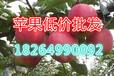 河南偃师苹果批发价格苹果批发苹果行情分析