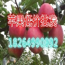 漯河蘋果批發價格嘎啦蘋果報價蘋果產地供應圖片
