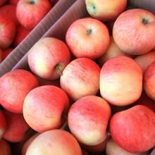 開封市蘋果批發價格美八蘋果批發蘋果批發多少錢一斤圖片