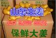 鄧州生姜批發價格面姜批發價格基地