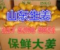河南安阳生姜批发价格小黄姜产地批发价格