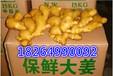 山东生姜水洗姜泥姜今日最近价格质量好又便宜