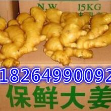 山东生姜水洗姜泥姜今日最近价格质量好又便宜图片