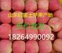 山东苹果批发产地红富士苹果批发价格