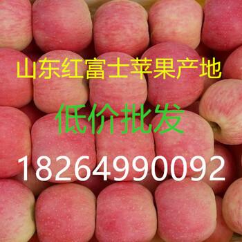 红富士苹果批发产地