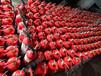 天津滅火器維修灌粉滅火器檢修加粉消防器材銷售