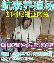 陕西养兔场,咸阳大型獭兔养殖基地法系獭兔价格