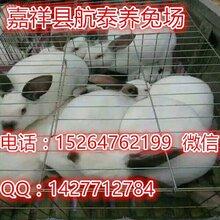 獭兔养殖前景预测,河南獭兔养殖场獭兔种兔价格