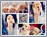 纯种大头金毛幼犬带防疫证血统证