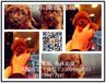 出售纯种健康玩具型红棕色巧克力色泰迪犬