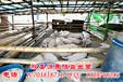 内蒙古哪里能买到发酵潲水喂猪的发酵剂?