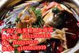 美蛙鱼头火锅培训,广州美蛙鱼头培训,味之华美蛙鱼头加盟