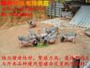 陆川猪生态养殖