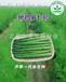 芦笋种子哪个品种好,鲁芦笋七号f1,北京供应商