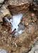 中山小欖地下消防管漏水探測工廠消防管漏水檢測