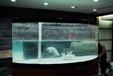 大小魚缸低價出售,廣州魚缸廠家年前折扣價格,廠家供應魚缸低價清倉,魚缸春節低價打折