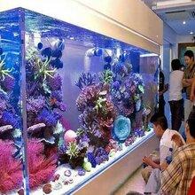 广州玻璃鱼缸清洗-天河区定做鱼缸-天河定做大堂鱼缸-天河区定做观赏鱼缸图片