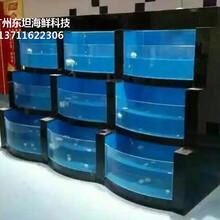 廣州梯形海鮮池設計/海鮮池做幾組制冷/廣州哪里定做玻璃海鮮魚池圖片