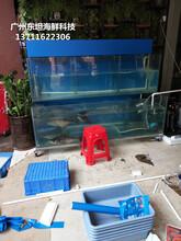 廣州海鮮玻璃魚池制作,廣州海鮮魚池定做,白云區海鮮池定做圖片