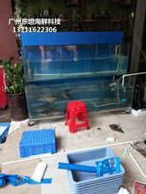 广州海鲜玻璃鱼池制作,广州海鲜鱼池定做,白云区海鲜池定做图片