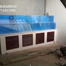 廣州做海鮮池-可移動海鮮魚池-廣州定做移動海鮮池圖片