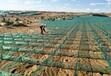上部蜂窩下部平紋固沙網防沙網沙障20厘米固沙網廠家