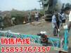 江苏扬州高质量产品框架式振捣梁汽油整平机性价比高1-16米