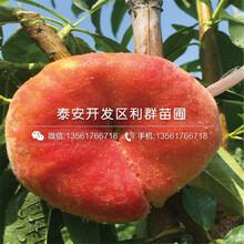 玉妃桃樹苗、玉妃桃樹苗每(mei)日報(bao)價圖(tu)片